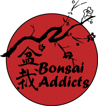 Web Page Bonsai Addicts - Pretoria East