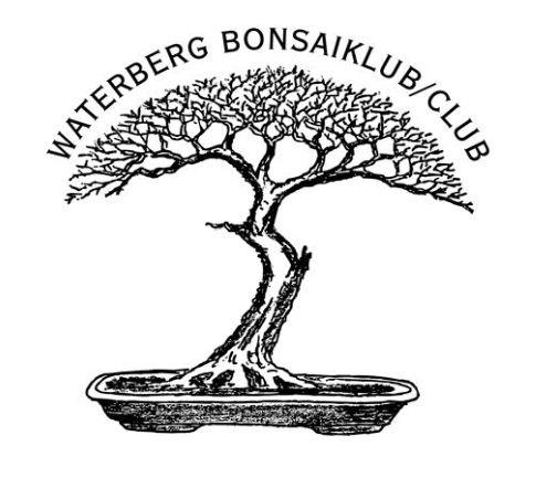 mikibu bonsai